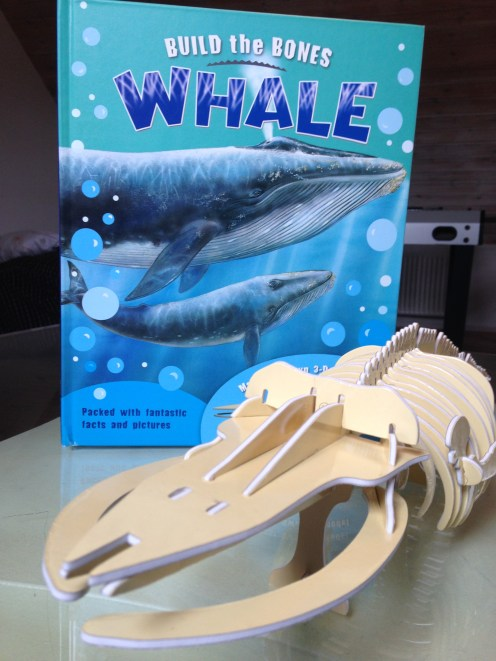 usborne completed whale