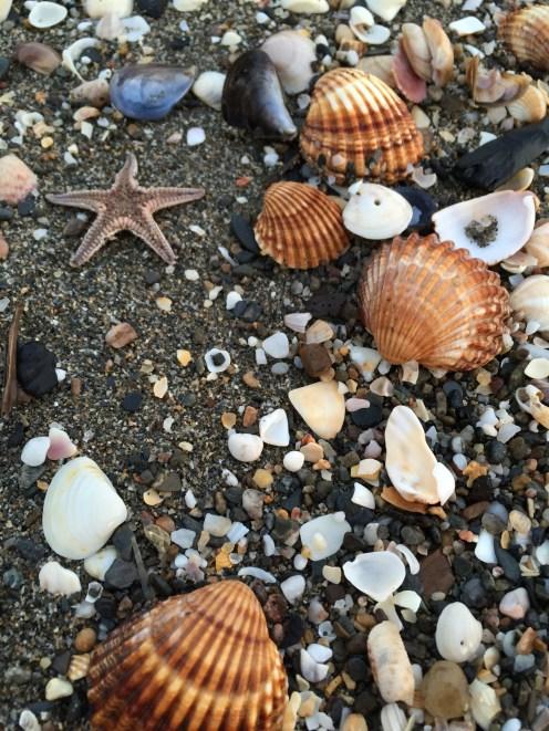 Shells and stars