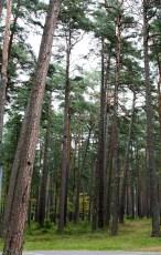 Dzintari Forest Park