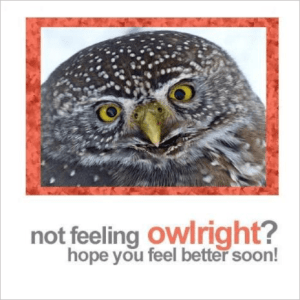 Not Feeling OWLright Get Well Greeting Card