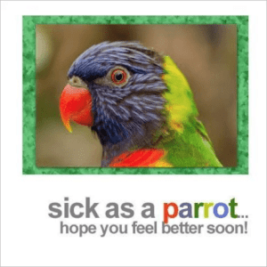 Sick as a Parrot Get Well Greeting Card