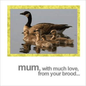 Mum From Your Brood Ducks and Ducklings Mother's Day Card