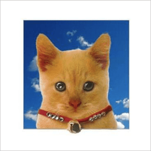 Ginger Cat Kitten Posh Pawz Greeting Card