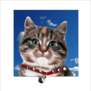 Tabby Cat Kitten Posh Pawz Greeting Card