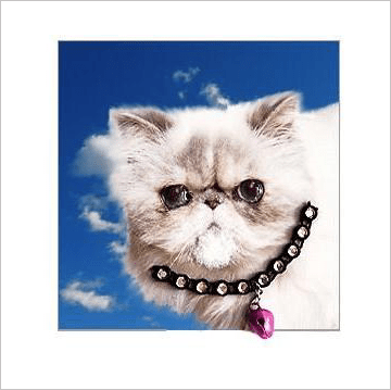 White Persian Cat Kitten Posh Pawz Greeting Card