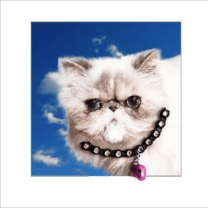 White Persian Cat Kitten Posh Pawz Greeting Card