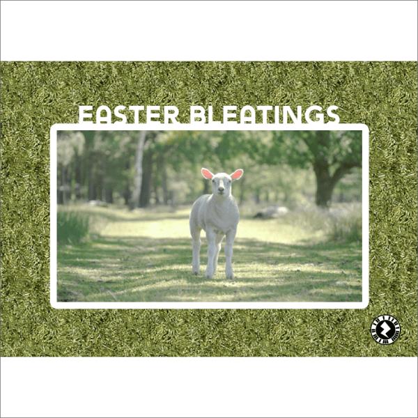 Easter Bleatings Lambs Card