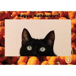 halloween cat AR Card