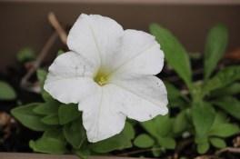 bloemen21