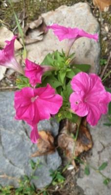 bloemen24