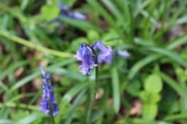 Kleine bloemetjes