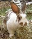 De kleur van konijnen