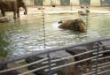Naar de zoo