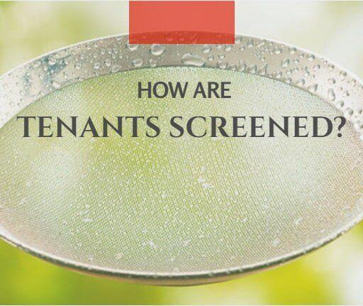 professional property management tenant screening