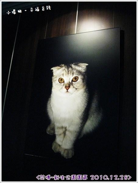 [玩♡台北-花博(新生公園區)~有好多貓咪的天使生活館&未來館] @小環妞 幸福足跡