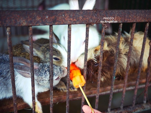 [玩♡宜蘭]餵食動物們好好玩~童心大起^^。宜農牧羊場