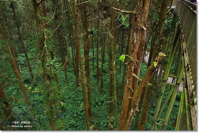 【南投景點推薦】溪頭森林遊樂區 ♥ 森林步道健行,蟲鳴鳥叫聲中的夢幻城堡 @小環妞 幸福足跡