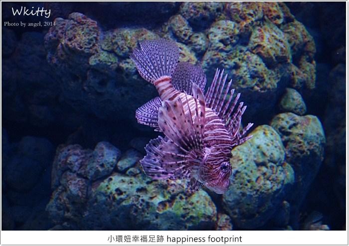 新加坡sea海洋館,新加坡必去景點,新加坡海底世界,新加坡海洋館,新加坡海洋館交通,新加坡海洋館門票,新加坡自由行,新加坡行程規劃 @小環妞 幸福足跡