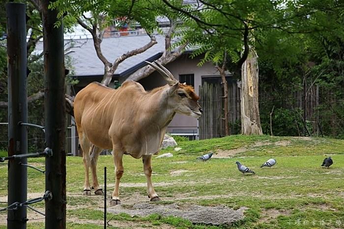 大阪周遊卡免費景點,大阪周遊卡景點,大阪必去景點,大阪景點,天王寺動物園 @小環妞 幸福足跡