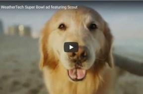 UW Vet Scout dog