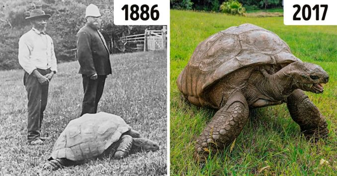 Meet Jonathan, a Tortoise Who's So Old, He's Already Lived in 3 Centuries
