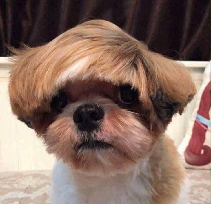 15 Haircuts That Almost Turned Pets Into Humans