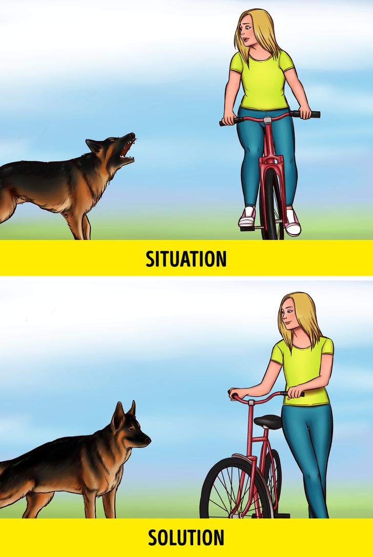 How to Save Your Life If You Meet an Aggressive Stray Dog