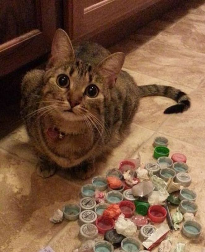 20 Animals Who Were Caught Right in the Act