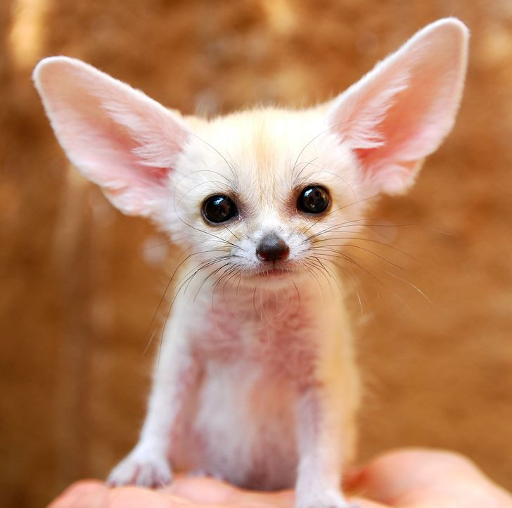 17 Unbelievably Cute Animals That Will Take Over The World