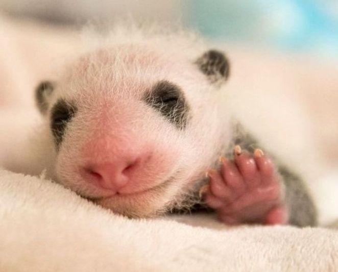 20+ Precious Newborn Animals That Will Make Your Heart Tremble