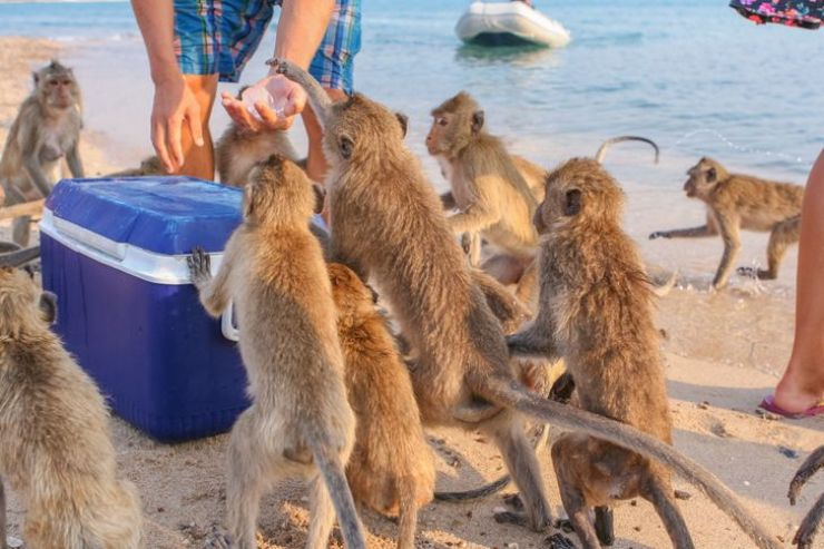 10 incredible places where people live alongside exotic animals