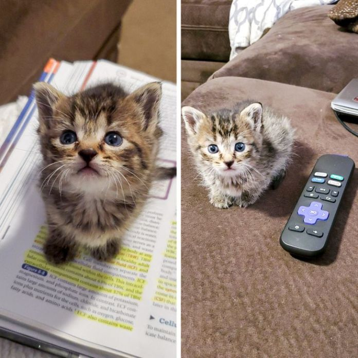 15 Baby Animals Who Are So Tiny, They Will Turn You Into a Caring Mommy in Seconds