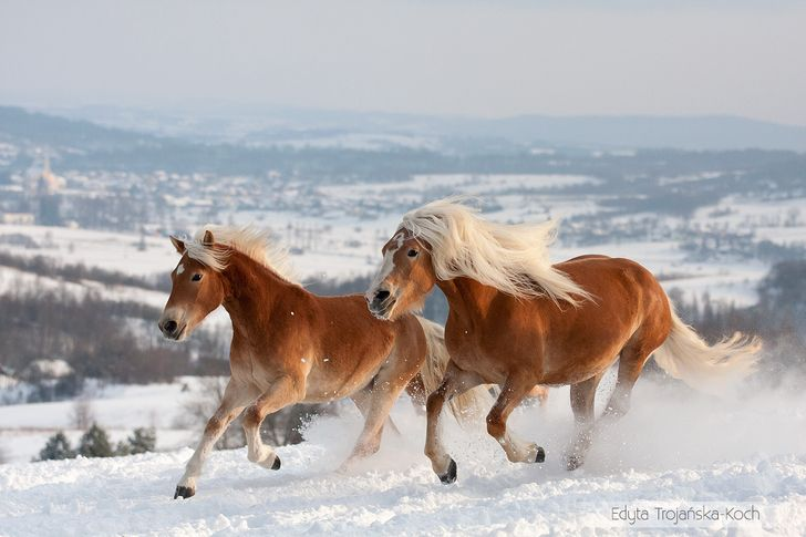 15 Breathtakingly Beautiful Horses