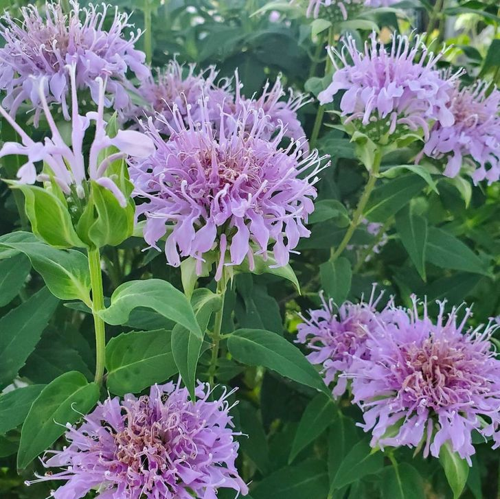 15 Plants That Can Naturally Send Mosquitoes and Bugs Away