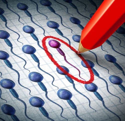 Did You Know That the Female Egg Chooses the Sperm and Not the Other Way Around?