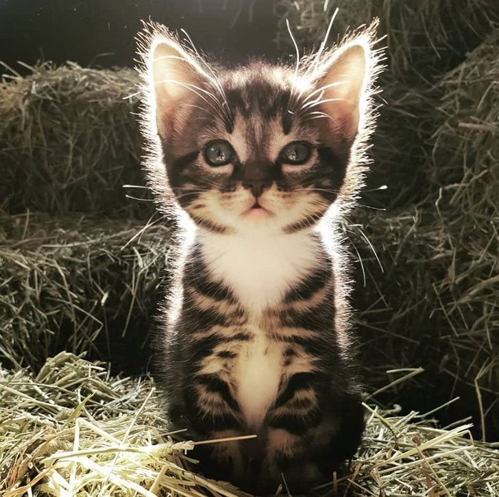 15+ Kittens That Can Turn Your Heart To Fluff