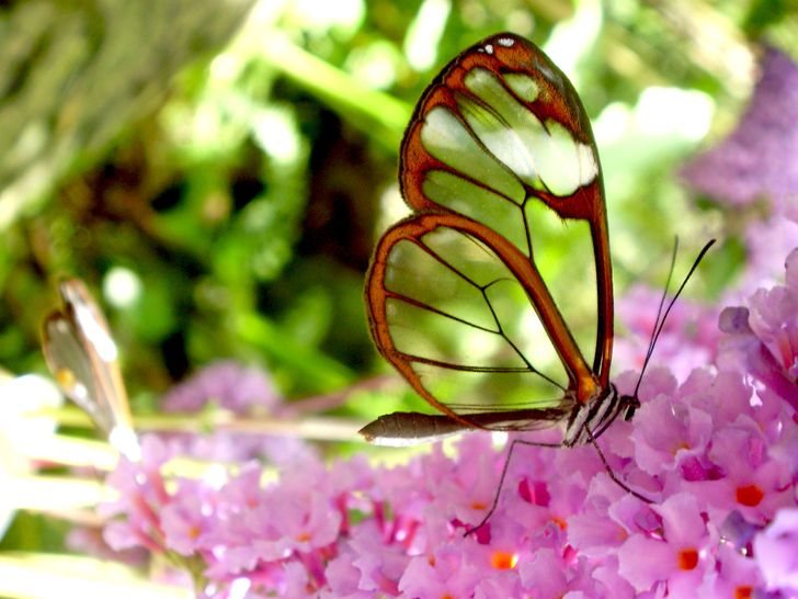 15+ Butterflies that took our breath away with their enchanting beauty