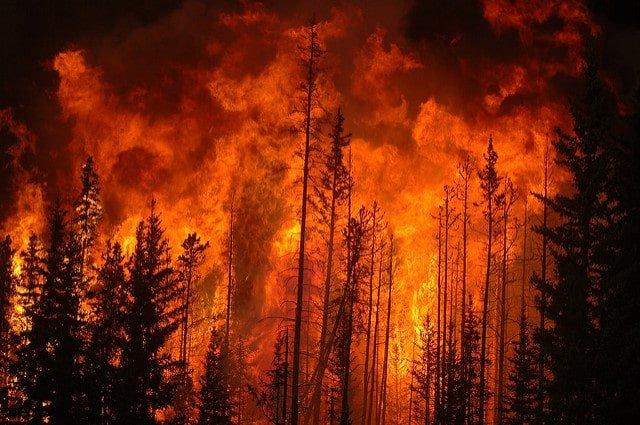 Pożary lasów takich jak w Kanadzie będzie coraz więcej