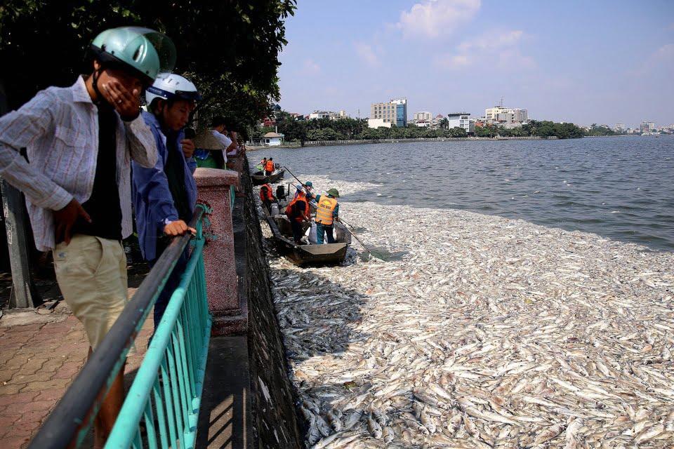 W Wietnamie setki kilogramów zdechłych ryb zatruwa miasto
