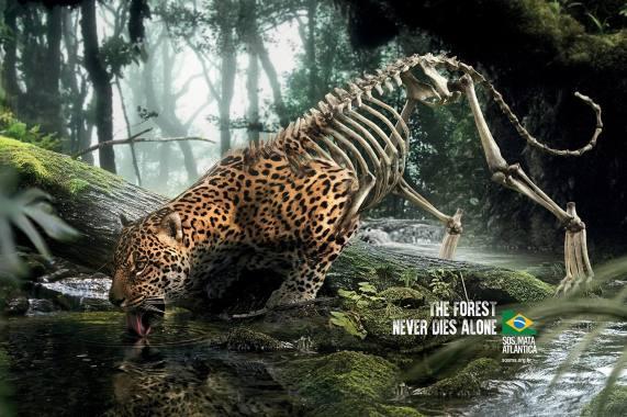 kampania Las nigdy nie umiera samotnie The Forest Never Dies Alone - wlaczoszczedzanie.pl/ @SOS Mata Atlântica