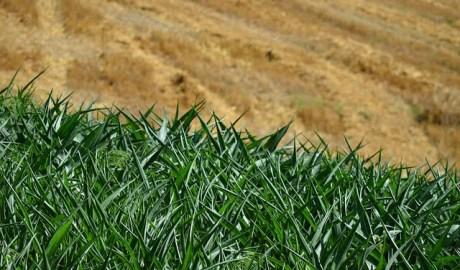 Na poprawę jakości powietrza w aglomeracjach wpływa rolnictwo miejskie
