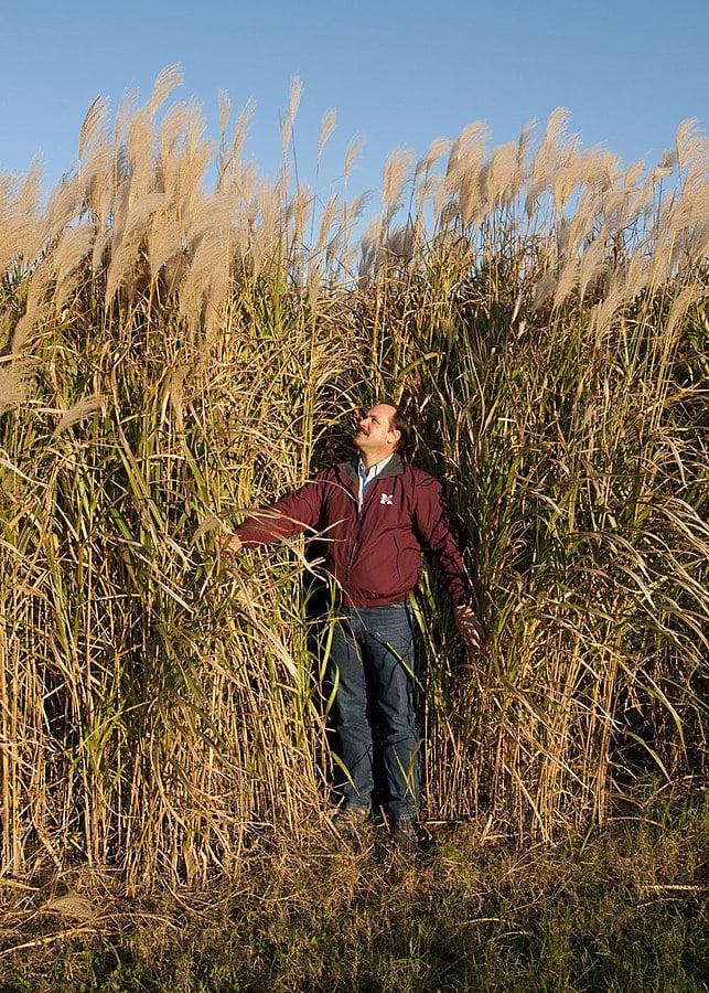 Grunty słabej jakości i nieużytki poprzemysłowe można z powodzeniem wykorzystać pod uprawę roślin energetycznych