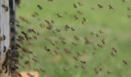 Pszczoły i kukułki pokażą liniom lotniczym jak modyfikować trasy przelotów samolotów i oszczędzać pieniądze