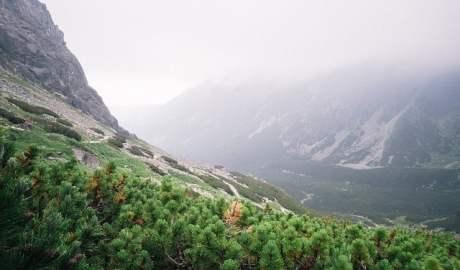 Naukowcy i ekolodzy alarmują! Tempo wzrostu bogactwa gatunkowego na szczytach górskich przyspiesza