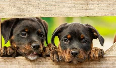 W miesiącach letnich liczba porzuconych zwierząt wzrasta o około 30%