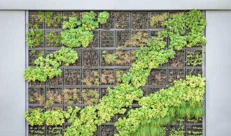 W szpitalu w Łodzi powstała zielona ściana złożona z różnych gatunków roślin. Posłuży do rekonwalescencji pacjentów