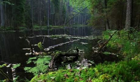 Roztoczański Park Narodowy to przykład spokojnej enklawy do rozrodu dla dużych drapieżników
