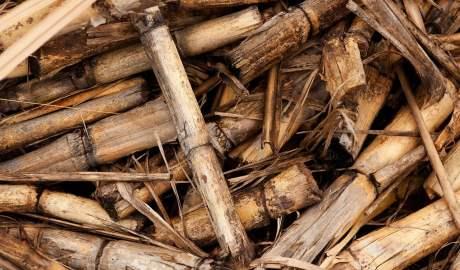 Nowoczesną technologię toryfikacji biomasy opracowują naukowcy z PŁ