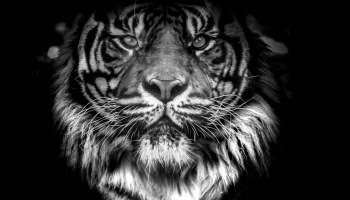 Jeszcze nigdy w historii ludzkości zagrożonych wyginięciem nie było tak dużo gatunków zwierząt