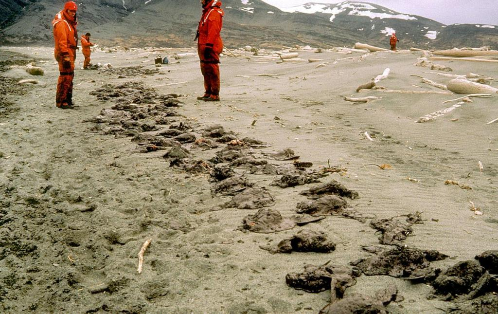 Martwe ptaki w oleistej mazi i piasku